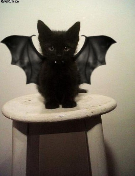 bat_kitty